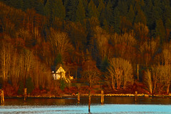 Little White Church in a Big Forest DSC_7898 (Shutterbuglette) Tags: ocean blue trees winter wet water look contrast landscape see rainforest warm dynamic maroon rich scene evergreen shore vegetation telephonelines inlet pilings roadside westcoast oldchurch surrounded shorline goldenhour mellow landscapephotography warves acrossthewater landscapephotographer costalforest