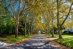 Long Branch Pano (dybcar) Tags: street autumn trees fall colors nikon jerseyshore longbranch d600