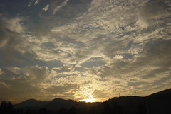 Day 59, Evening sky. (Abbottabad, Pakistan) (Somersaulting Giraffe) Tags: pakistan sky mountains bird clouds outdoor eveningsky abbottabad vales