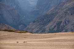 Labor Donkey_1768 (hkoons) Tags: ranch sky mountain tractor mountains history peru latinamerica southamerica weather cuzco clouds america landscape view farm cusco country soil dirt spanish crop andes fields crops produce farmer plow agriculture elevation sacredvalley commodity peruvian ollantaytambo fertile southernperu