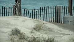 Snow Fence (joeldinda) Tags: birthday family winter vacation beach water waterfront michigan sony cybershot lakemichigan greatlakes february sleepingbeardunes sonycybershot attractions sleepingbear snowfence 2016 pocketcam sleepingbearnationallakeshore 3054 dhday sonydsch55 dsch55
