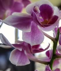 Espresso cup orchids