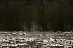 Shattered (Herr Olsen) Tags: red rot saint gare dot depthoffield shallow lille shards scherben sauveur tiefenschrfe schattered