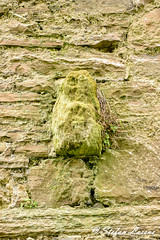 Abbeylara Cistercian Abbey Sle-na-gig (Salmix_ie) Tags: county ireland church monument abbey grave stone wall yard religious march ancient nikon worship praying goddess historic national pre sacred burial ritual nikkor fertility pagan sheelanagig 2016 longford d7100 slenagig