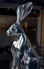 Another Bunny! (Keith Mac Uidhir  (Thanks for 3.5m views)) Tags: ireland dublin easter pascua irland pscoa ostern easterbunny dublino irlanda irlande pasqua pasko ierland easterrabbit irska wielkanoc pques dubln irlandia lirlanda irsko  paskalya airija  irlanti  cng  iirimaa ha     rorszg         rlnd