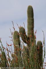 Ocotillo and Saguaro (Kukui Photography) Tags: arizona tucson airshow saguaro davis ocotillo afb 2016 davismonthanafb monthan dmafb openhousedmafb