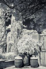 Albuquerque Botanical Gardens (inlightful) Tags: flowers trees leaves garden ir botanical infrared nir nearinfrared albququerque