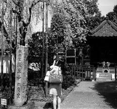CONFLUENT (Dinasty_Oomae) Tags: street blackandwhite bw flower monochrome tokyo blackwhite outdoor  cherryblossom  zeissikon asakusa   taitoku         supersix