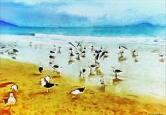 birds on the beach (Cleide@.) Tags: brazil  art beach birds digital photo exotic oilpaint 2016 ps6 artdigital sotn camborisc awardtree cleide netartii