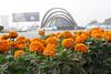 DHA Lahore (SaibanAssociates) Tags: property services zong dhalahore
