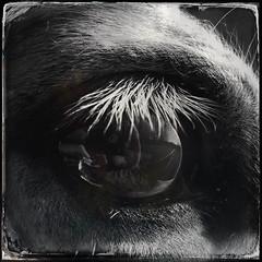 Tinker (DWO630) Tags: horse macro eye closeup square random filters equine iphone hipsta iphoneography hipstamatic shaketorandomize