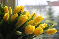 happy easter 2016 (4) (kexi) Tags: flowers green window yellow canon easter march holidays dof tulips many depthoffield 2016 instantfave