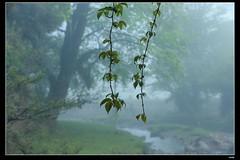 DP1U6631 (c0466art) Tags: light beautiful grass fog creek canon landscape scenery atmosphere mysterious land 1dx c0466art