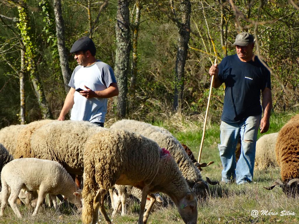 Águas Frias (Chaves) - ... pastores e rebanho ...