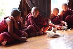 Monks' cats (deus77) Tags: windows portrait people cats cat burma monk buddhism monastery monks yan myanmar burmese novice pyay nyaungshwe nyaung shwe