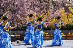 Hanami greeting dance in Fukushima (Tatters ) Tags: people japan japanese dance women dancing fukushima hanami hanamiyama bluegress