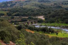 El Puente (Luca Morales Guinaldo) Tags: bridge tree puente rboles olive olivo