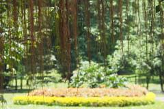 P4052420 (Vagamundos / Carlos Olmo) Tags: travel tourism garden botanical olympus viajes fotos srilanka ceylon jardín jardínbotánico photooftheday picoftheday botánico aroundtheworld vueltaalmundo fotodeldia 500px ceilán slowtravel igers mytravelgram instatravel photos omdem10markii