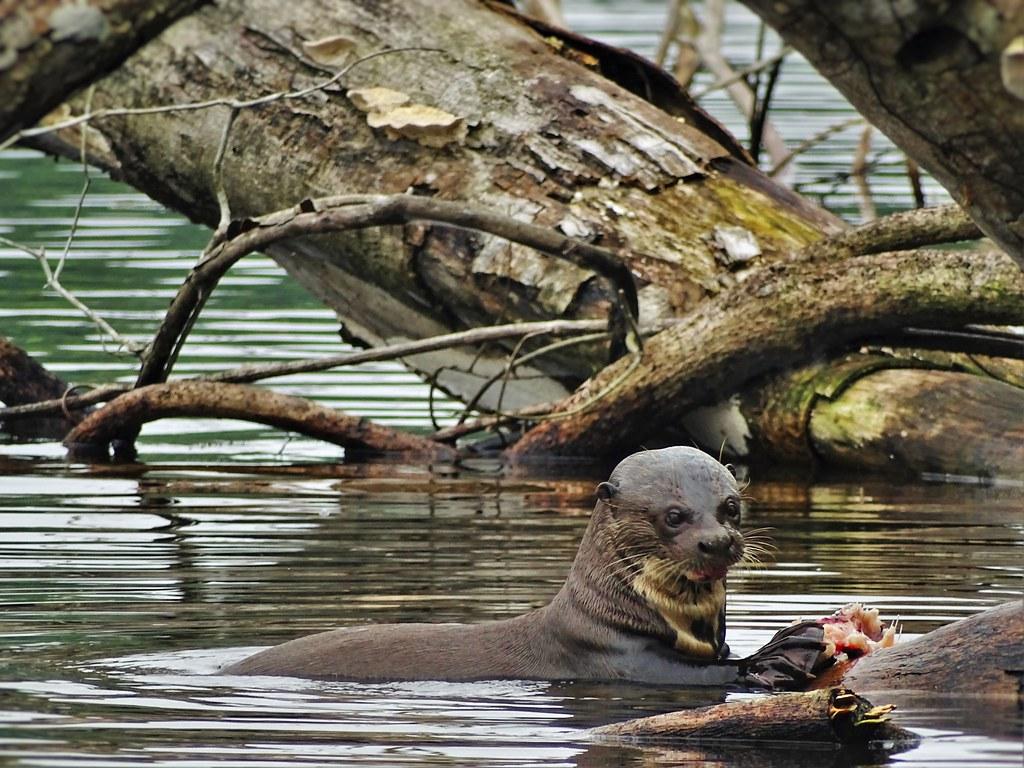 conservation of biodiversity in peruvianamazonia through Free essay: conservation of biodiversity in peruvian amazonia through integrated action 139 conservation of biodiversity in peruvian amazonia through.