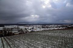 IMG_1480 (D.Phil) Tags: schnee winter natur freiburg landschaft kaiserstuhl weinberge opfingen