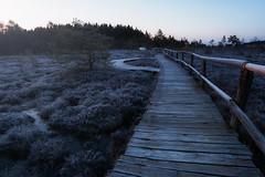 Safe ways ? (Rainer Schund) Tags: nature sunrise nikon nebel natur safe blau moor holz kalt morgen ways steg morgens reif blauestunde nikond700 naturemasterclass natureexploring