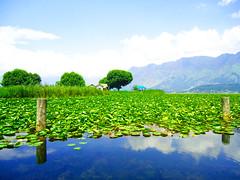 Dal Lake in Kashmir, Gargi Vyas, India. (International Education) Tags: travel blue sky india lake mountains flower reflection green water beautiful waterlilies kashmir