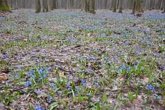 DSC_0045 (Rinswid) Tags: park nature animal spring kharkov feldman ecopark