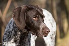 _D812565.jpg (Mary 01) Tags: dogs easter agility robyn hnh meganmeade deborahmeade