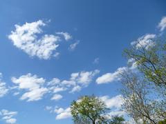 Ciel printanier (Malys_) Tags: soleil bleu ciel nuage arbre