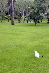 bird hunter (kexi) Tags: white green grass animal vertical cat canon turkey waiting hunting may resort hunter anticipation hunt lurking 2015 instantfave