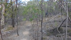 Para Wirra 40 (WEA Ramblers) Tags: hiking australia bushwalking southaustralia parawirra yattalunga fayharding