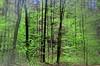 The fresh green in the forest (Tobi_2008) Tags: trees green nature forest germany deutschland saxony natur sachsen grün wald blätter bäume allemagne germania diamondclassphotographer