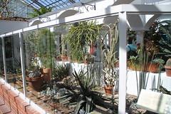 IMG_2452 (Mercar) Tags: canada garden botanical montreal jardin greenhouse botanic botaanikaaed qubeck