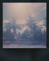 palm trees & sun (dfuster74) Tags: film polaroid photography instant analogue impossible roidweek pxfilm dfuster74 roidweek2016