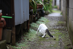 Escape (ogizooo) Tags: cat canon alley alleycat  straycat  ef100mmf2usm