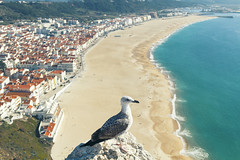 Nazaré - Portugal (betinho_had) Tags: trip travel travelling bird beach portugal nature colors beautiful canon stars amazing europa europe alone euro pássaro traveller adventure viagem eurotrip nazaré aventura mochilão viajante mochileiros eurotravel amazingshot flickrstars brasilportugal