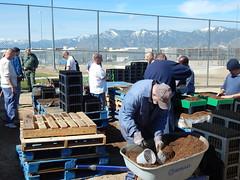 Inmates working together (BLM Nevada) Tags: fire nevada grouse sage restoration sagebrush rehab blm inmates ndoc