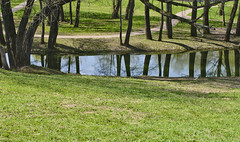 Spring Etude #3 (Pavel K) Tags: trees tree water grass reflections river spring nikon outdoor tokina tokina287028 nikond7000