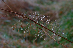 Bejewelled (Richie Rue) Tags: uk autumn england mist color colour fall wet rain misty fog landscape outdoors landscapes drops nikon bradford yorkshire united foggy kingdom drop drip raindrops drips raining autumnal d300 bejewelled