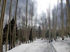 Aspens & Snow (sarowen) Tags: winter snow ski newmexico skiing rockymountains redriver snowskiing redrivernewmexico redrivernm southernrockies redriverskiarea