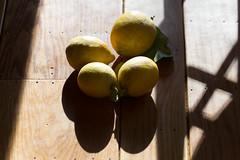 IMG_4448 (armadil) Tags: lemon lemons freecycle meyerlemons