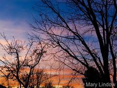 January 11, 2016 - A beautiful Thornton sunet. (Mary Lindow)