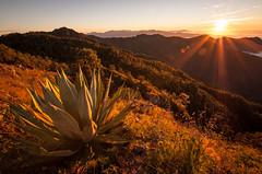 Agave sunset (ckocur) Tags: mountains mexico town hiking jalisco sierra sansebastian labufa sansebastiandeloeste sierraoccidental