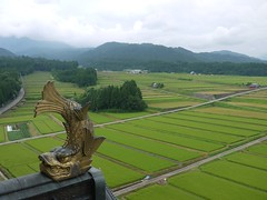Rice fields from the highest vantage point. (yukky89_yamashita) Tags: castle japan view fields 日本 outlook fukui 城 prospect vantage 福井 越前大野