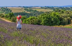 Hello! (marypink) Tags: sky france me landscape lavander fields francia paesaggio provenza lavanda valensole 2470mmf28 nikond800