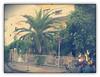 Olympic Beach, 2007 (cod_gabriel) Tags: smoke resort greece grecia palmtree earl palmier seasideresort pieria olympicbeach statiune olympicriviera staţiune pixlromatic photogramio