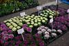 Purples and Greens (kewpiedollchan) Tags: japan kyoto shrine market kitano tenmangu kamishichiken