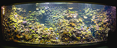 Riff im Aquarium (Jan Wasmund) Tags: fish color colour water zoo aquarium wasser pentax darwin fisch fisheye reef farbe rostock bunt k50 1017mm darwineum