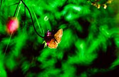 Butterfly (Thomas Tolkien) Tags: landscape education teacher tolkien thomastolkien tomtolkien tolkienphotography httpsthomastolkienwordpresscom
