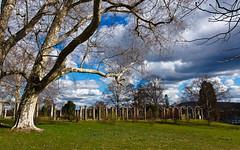 Stuttgart - Rosensteinpark on February (++sepp++) Tags: park winter clouds germany landscape deutschland europa europe cloudy stuttgart wolken february landschaft wolkig badenwrttemberg platanen rosensteinpark